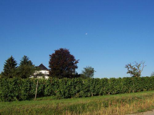 vineyards heilbronn landscape