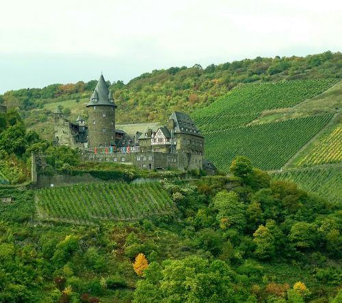vineyards rhine nature