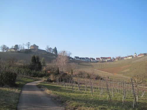 vineyards autumn nature