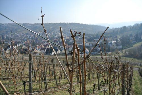 vineyards vines wine