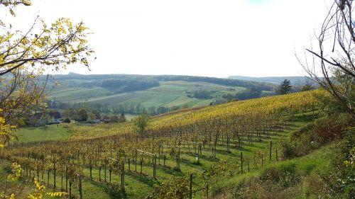 vineyards nature hiking
