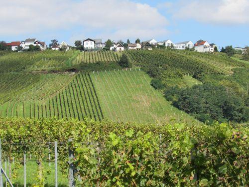 vineyards landscape winegrowing