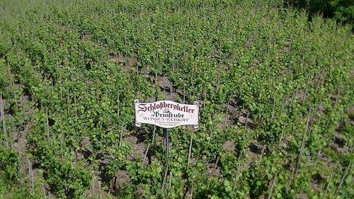 vineyards germany vineyard