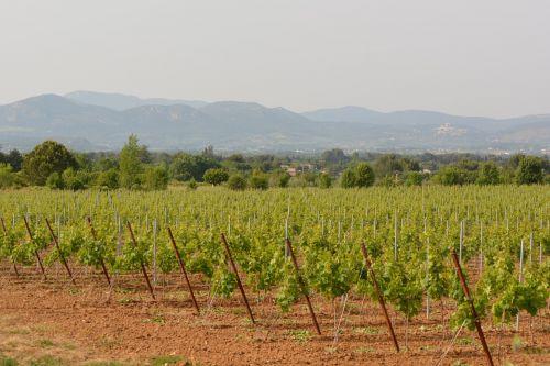 vineyards landscape view