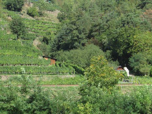vineyards wachau austria