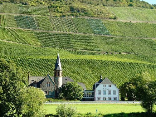 vineyards mosel wine growing area