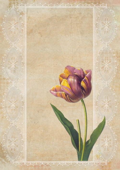 vintage tulip background