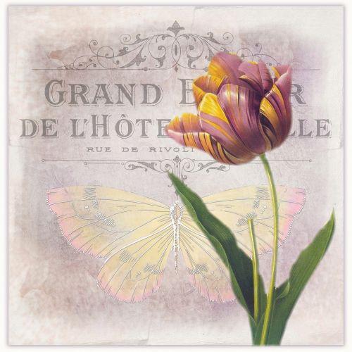 vintage flower tulip