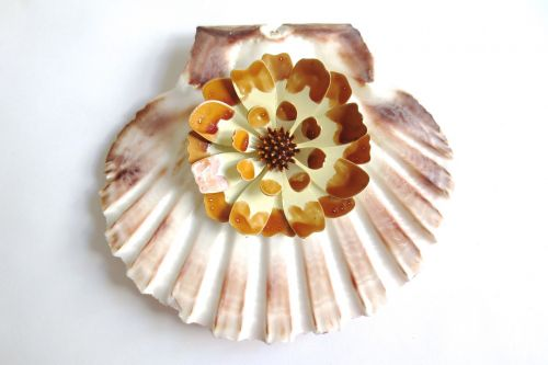 vintage scallop shell
