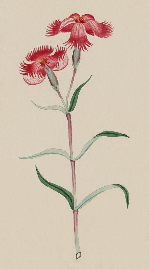 vintage watercolour watercolor