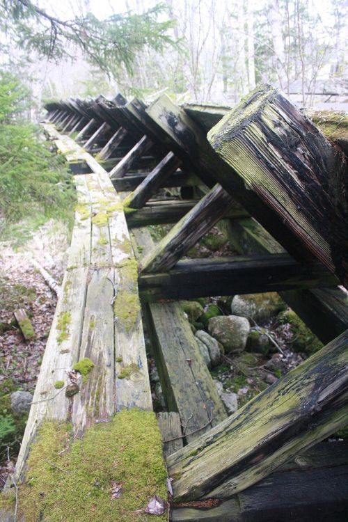 vintage logging old