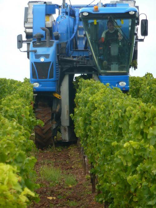 vintage wine harvest wine