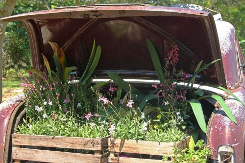 vintage car with plants in boot car old