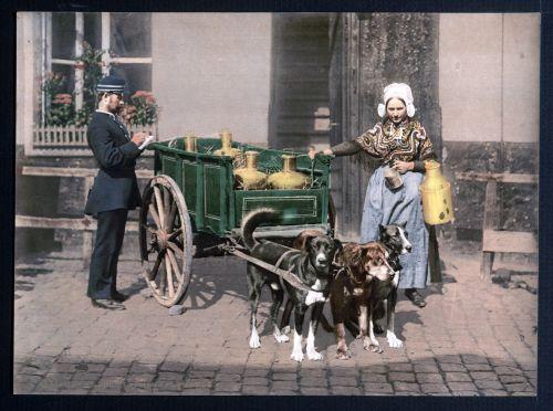 Vintage Dog Cart Photo