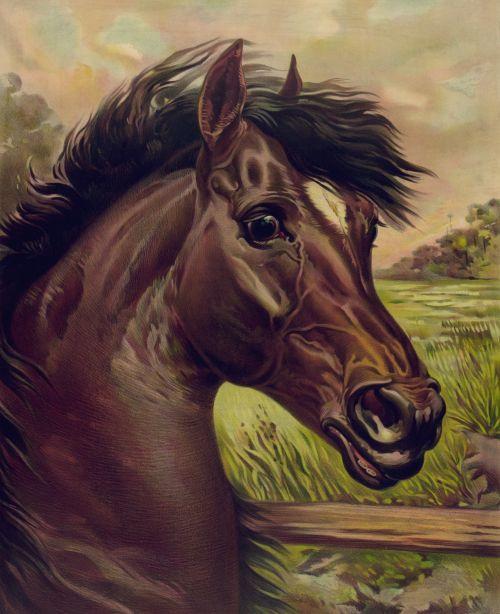 Vintage Horse Painting