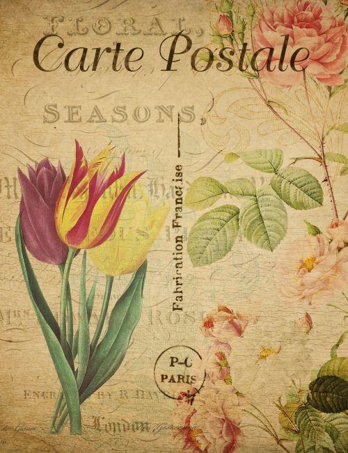 Vintage Postcard Flowers