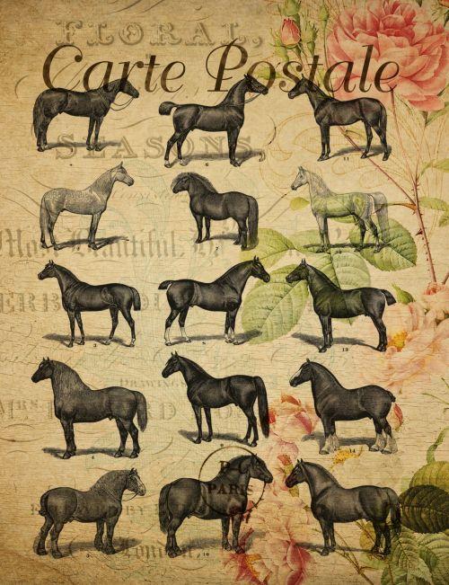 atvirukas, Prancūzų kalba, vintage, arklys, arkliai, veislė, veislės, juoda, siluetas & nbsp, siluetai, gėlių, fonas, menas, iliustracija, figūra, kontūrai, gyvūnas, gyvūnai, ūkis, Scrapbooking, senas, Laisvas, viešasis & nbsp, domenas, derliaus atvirukų arklių veislės