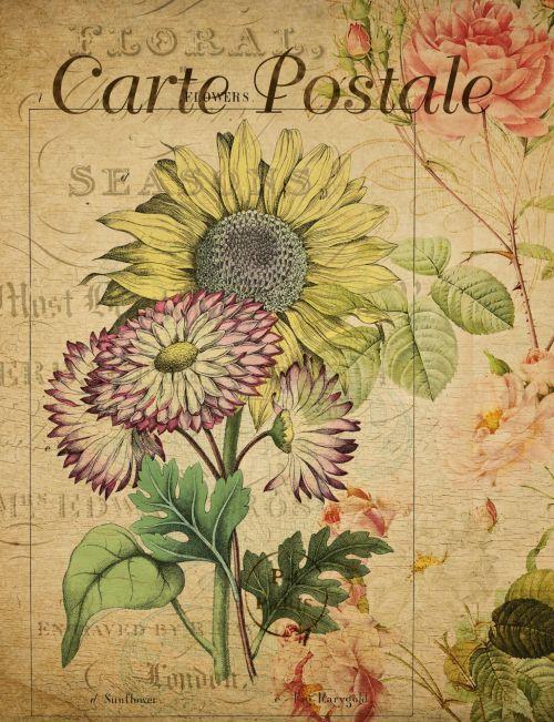 Vintage Postcard Sunflower