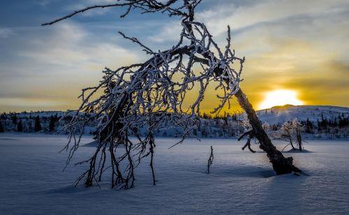 vinter soloppgang landskap