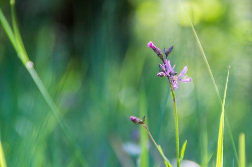 violet flower the sun
