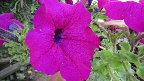 violet  flower  purple flowers