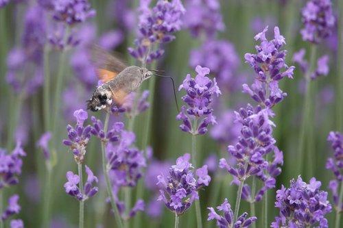 violet  nature  flower