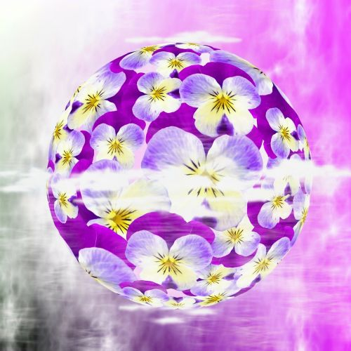 violet pansy viola
