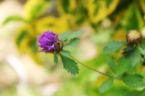 Violet Flower 2