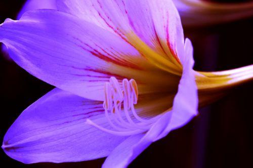 Violet Flower 3