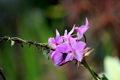 Violet Flower Background 5
