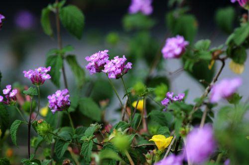 Violet Flowers 2