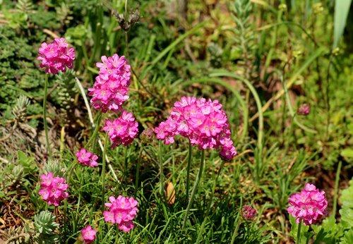 violet flowers  spring  plant