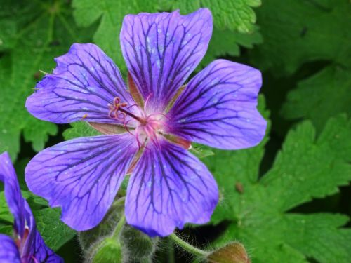 Violet Garden Flora
