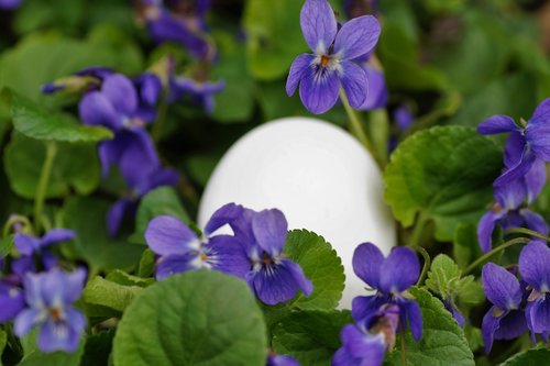 violets  eggs  white