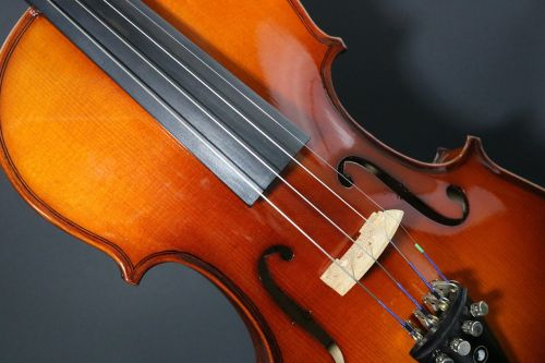 violin stringed musician