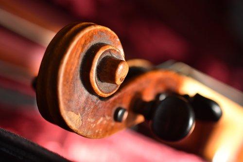 violin  snail  violin worm