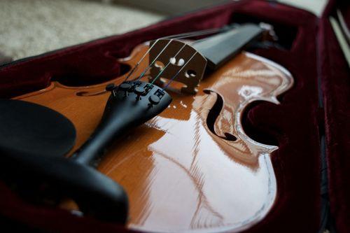 violin bridge violin instrument