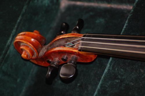 violin worm snail violin