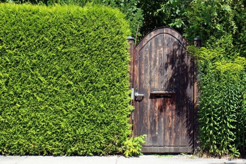 vision protection hedge privacy hedge
