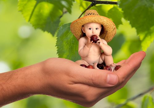 vitamins fruit nutrition