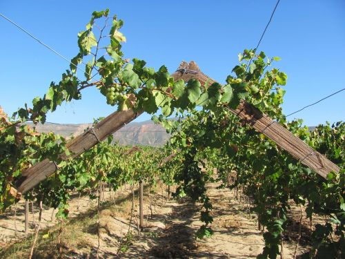 viticulture nature south africa