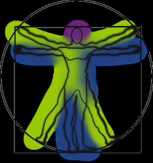 vitruvian man anatomy science
