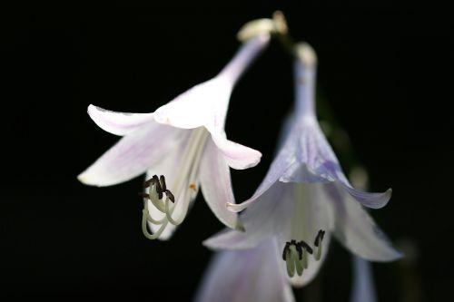 vivian chu plants nature