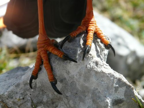 vogelfuesse feet claw