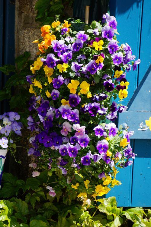 Floral Component