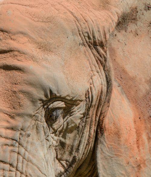 Wrinkles Animal