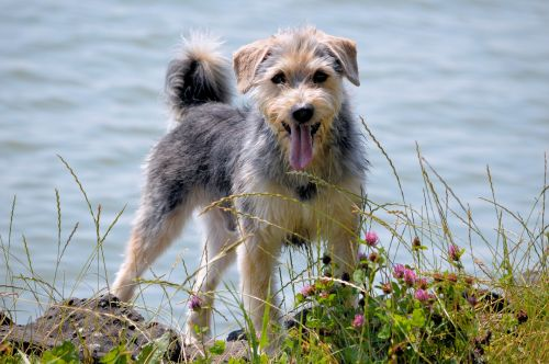 dog,animal,pet,walking,playing,park,water,happy,cheerful,cheerful