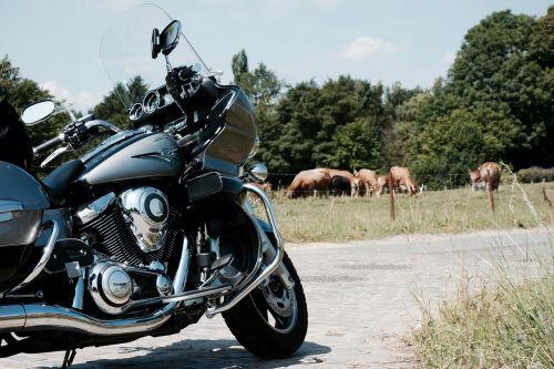 vulcan,Kawasaki,kraštovaizdis,karvės,olandų kraštovaizdis,naršyklė,motociklas,transportas