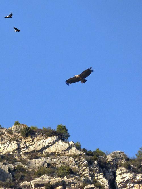 vultures hill priorat