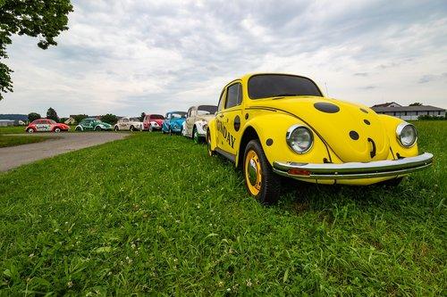 vw  beetle  volkswagen
